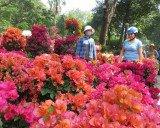 """Lo bị """"ép rác"""", hoa Tết xả hàng sớm ở Sài Gòn"""