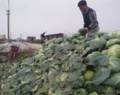 Lạ kì rau trong nước rẻ như bèo, vẫn nhập 3.000 tấn từ Trung Quốc