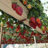 Du lịch nông nghiệp: Lâm Đồng tăng mô hình du lịch canh nông